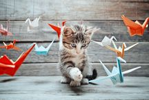 Cats / Here are some cute cats!