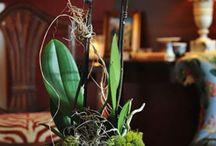 Plants&Flower arrangements