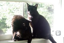 Black Kitties / by Linda Lageson