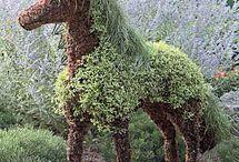 natur hest