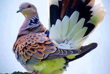 Ptáci / obrázky ptáčků