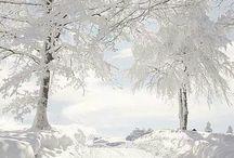 ✚ WHITES