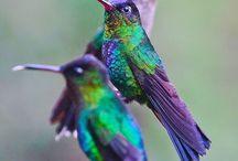 Pájaros multicolor
