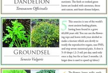 Garden / Permaculture