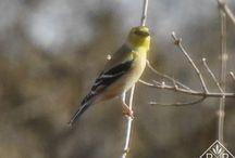 GARDEN: BIRDS