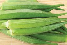 Tips for Growing Okra / Board dedicated to the world of growing okra!
