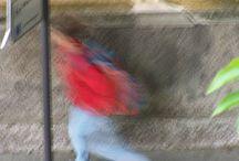 foto di giovanni melegari / foto fatte dalla finestra di casa