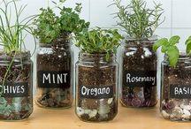 Herbs, yrtit