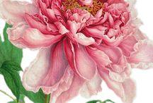 Fleur planche