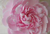 Sugar flower make