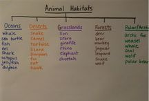 animal habitats / by Kelly Vaughn