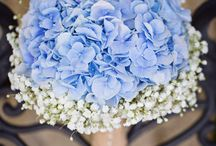 hortensia wedding