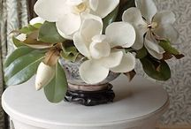 Magnolia - Šácholan