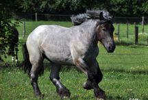 Meine Lieblings pferde