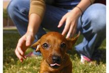 i love dachshund *-*
