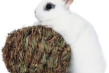 Bunny Business / Food, treats, and accessories for your pet rabbit!