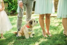 Wedding Day Dogs / Many of our couples have decided to include their pup in their big day!