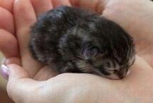 a baby kitten awwww