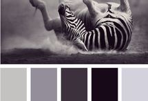 Color Palettes / by Andrea Lambert