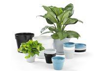 Terra - Pot plants / The classical styling of a terracotta pot is given new life with an updated colour scheme. Terra adds pops of colour to your living room, backyard or terrace.
