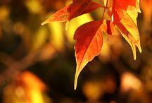 Fall....I love it!!!!