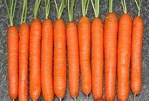 ako mat peknu mrkvu