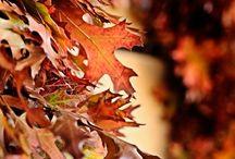 Entre hojas y ramas
