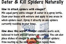 How to kill spiders