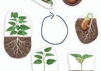 Ciclo plantas