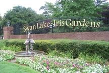 Swan Lake :-) / by Cayley Cross