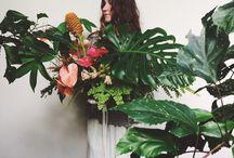 Plants / Flowers & leaves