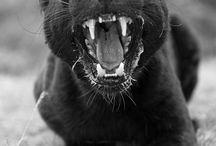 Animais / Animals / by Milrem Eltz