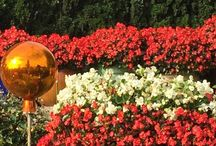 feuerroter Herbst (blazing red) / dieser Hausgarten in Wien sticht hervor