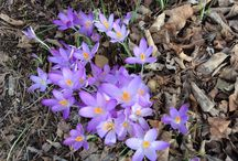 Spring in Abingdon