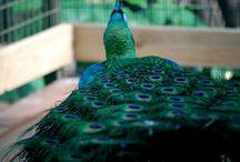 put a bird on it / by MacKenzie