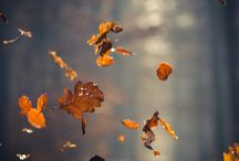 Falling leaves in the autumn