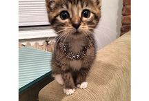 Unbearable Cuteness / Humans aren't the only ones who look good in jewels