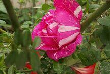 Naturaleza Flores