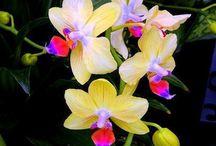 Storczyki i orchidee