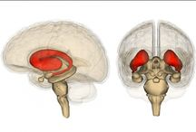 Brain Health & Creativity / brain health awareness, interesting brain facts, healthy aging, enhance creativity
