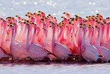 Flamingos, Penguins, etc., For Maddie
