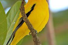 """Pássaros, Araras, Aves sempre """"livres"""""""