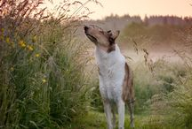 cute treasure 8:-) / ...and, dear friends, guess what will be my future dog... (P.S.: the right answer is a smooth collie:))