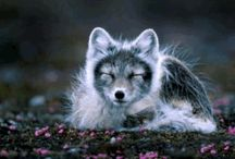 The Arctic / Discover the Arctic. Land of Ice, freezing temperatures and extraordinary wildlife