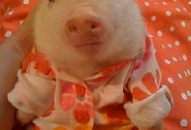 Cute pigs  / by Mary Ann Jenkins