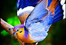 Passaros e aves