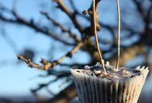 Bird feeder cupcakes