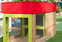 Chicken Coop / by Becky Smith Flack