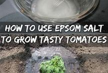 Tips in gardening