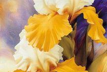 iris peinture